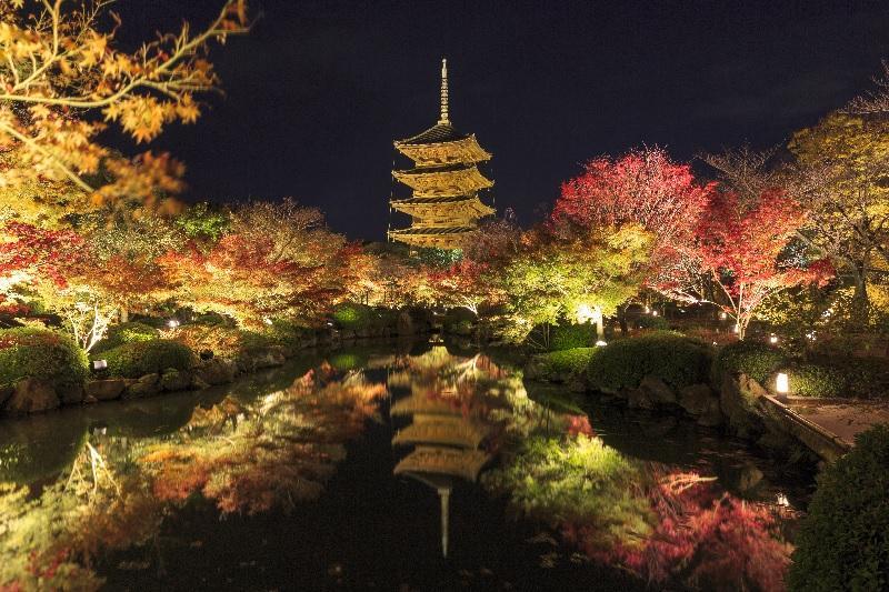 東寺 ライト アップ 2020